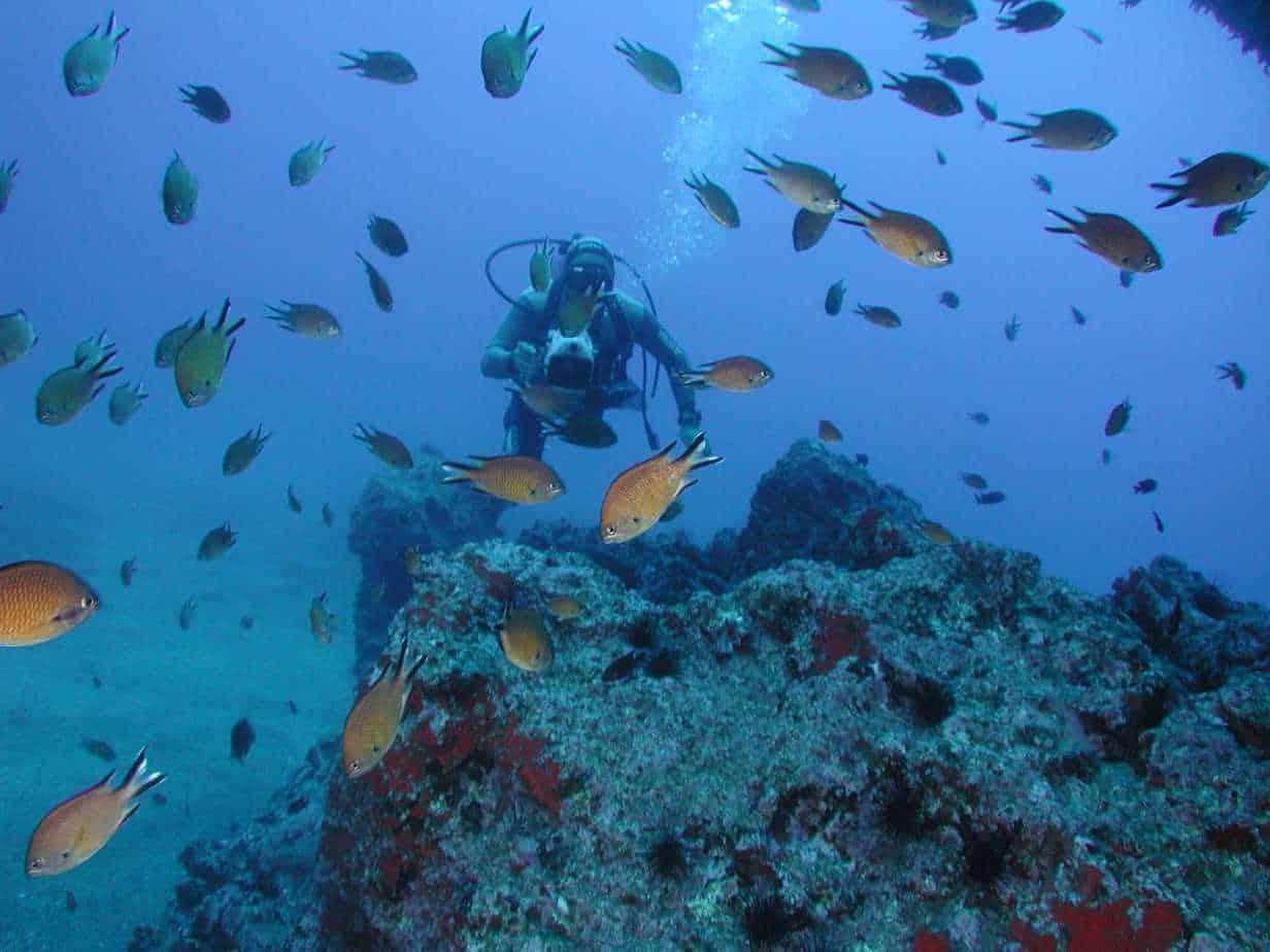 Castanhetas fish