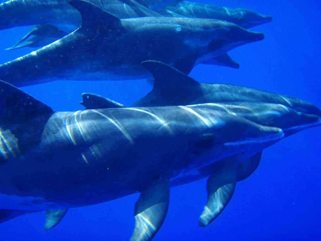 Dolphins in Funchal