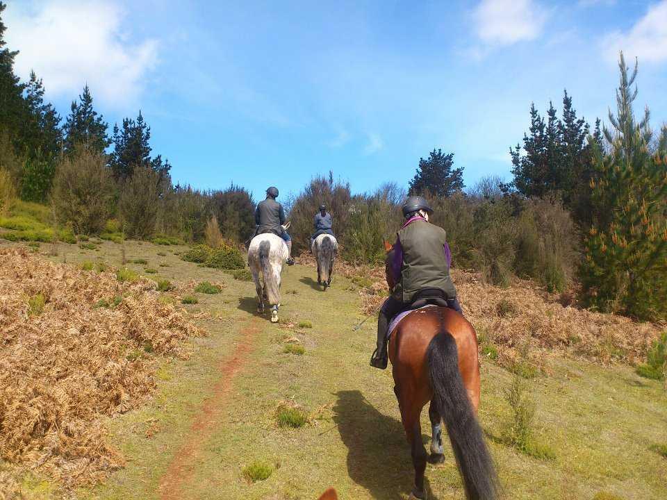 Horse riding - Santo da Serra Equestrian centre