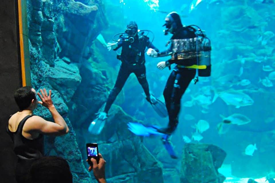 Dive with the fish in Madeira Aquarium